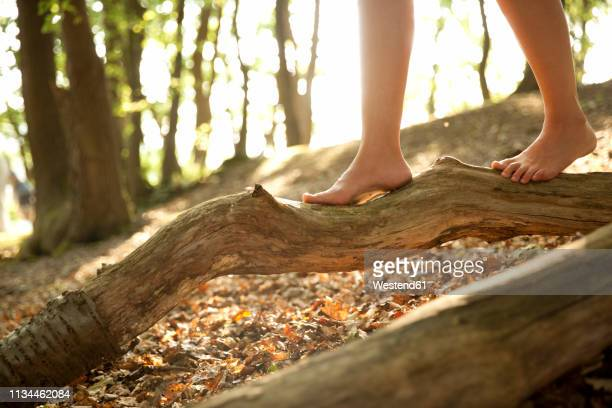 close-up of feet of a woman in forest balancing on a log - gleichgewicht stock-fotos und bilder