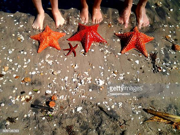 Close-up of feet on the beach with starfish