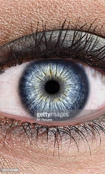 close-up of female eye with make-up - eyelid stock photos and pictures