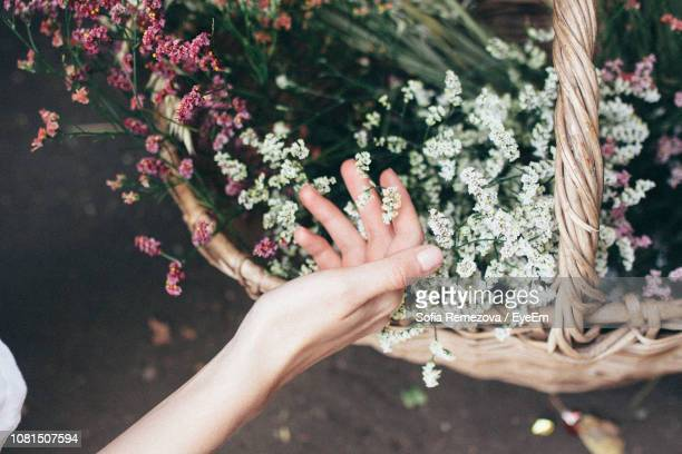 close-up of female hand touching flowers - wicker stock pictures, royalty-free photos & images