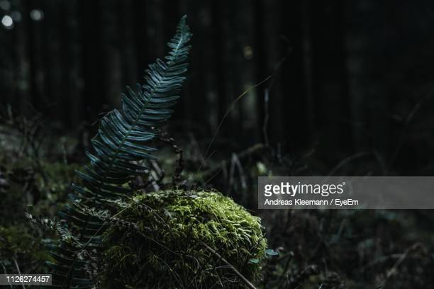 close-up of fern growing on tree trunk - muschio flora foto e immagini stock