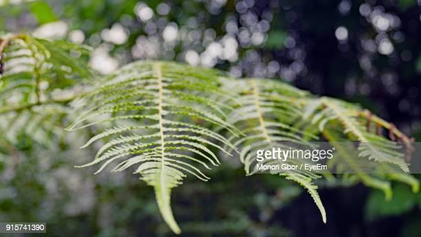 Close-Up Of Fern Leaves On Tree