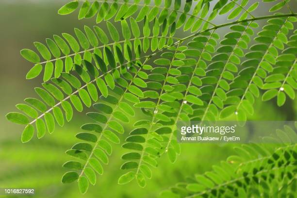 close-up of fern leaves - eyeem stock pictures, royalty-free photos & images