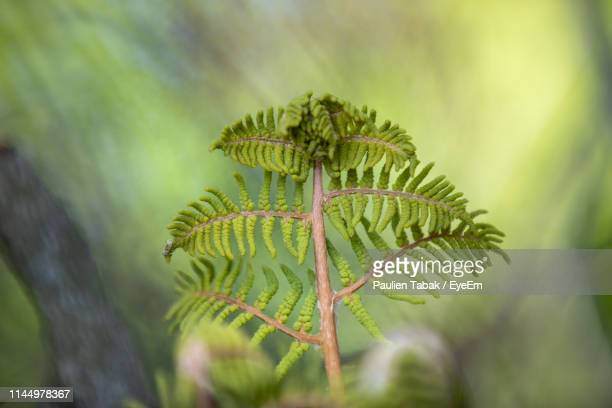 close-up of fern leaves - paulien tabak stock pictures, royalty-free photos & images