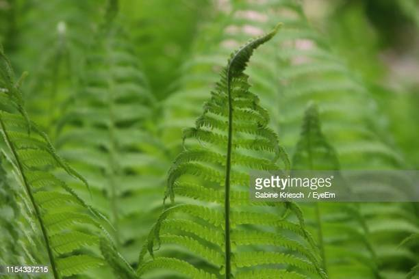 close-up of fern leaves - sabine kriesch stock-fotos und bilder
