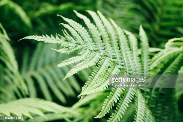 close-up of fern leaves - fern stock pictures, royalty-free photos & images