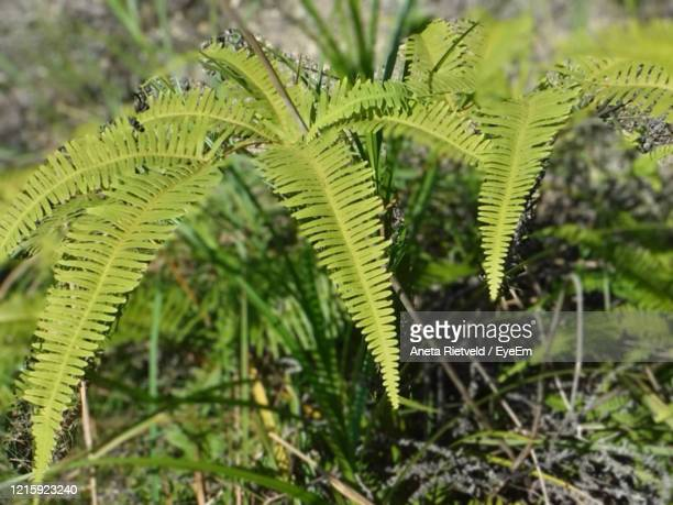 close-up of fern leaves - aneta eyeem stock pictures, royalty-free photos & images