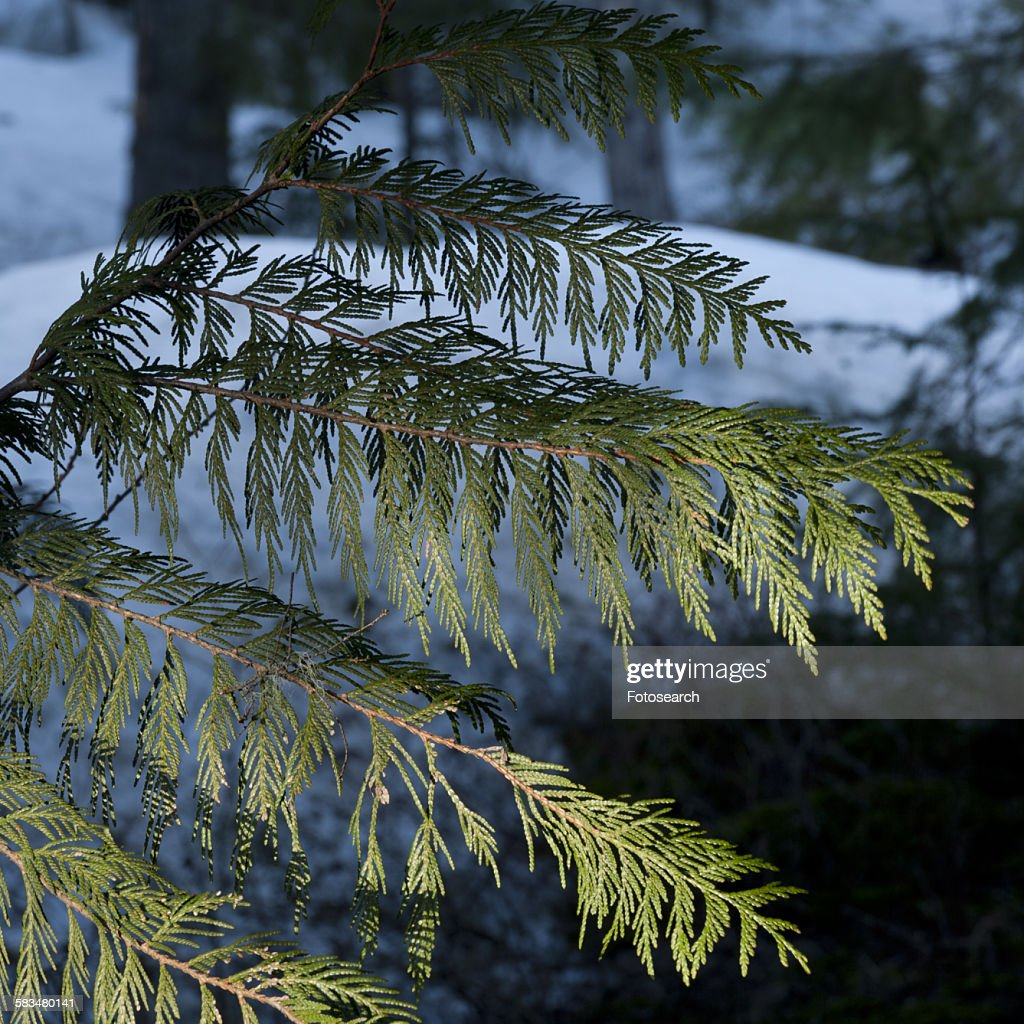 Close-up of fern leaves : Stock Photo