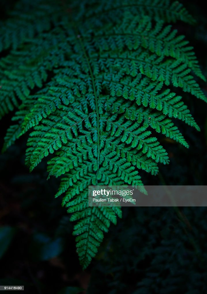 Close-Up Of Fern Leaves : Stockfoto