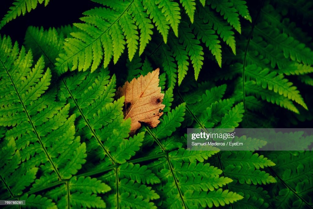 Close-Up Of Fern : Foto de stock