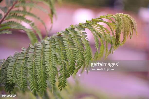 close-up of fern - jose ayala stock pictures, royalty-free photos & images