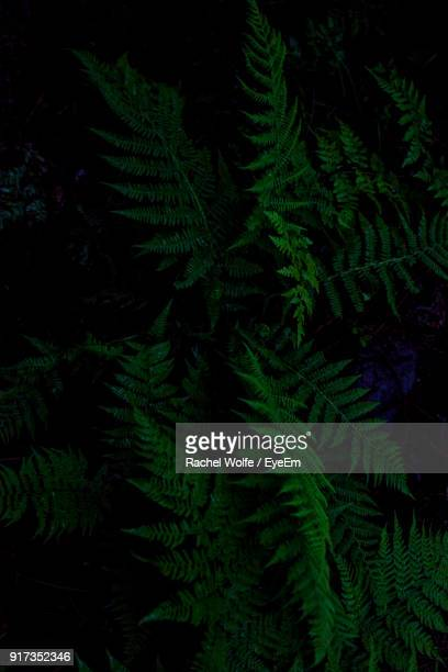 close-up of fern tree - rachel wolfe stock pictures, royalty-free photos & images