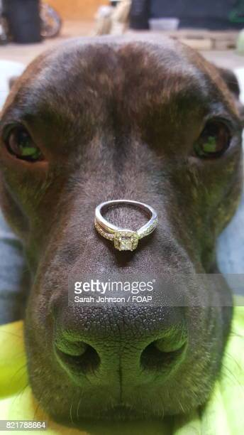 Close-up of finger ring on dog nose