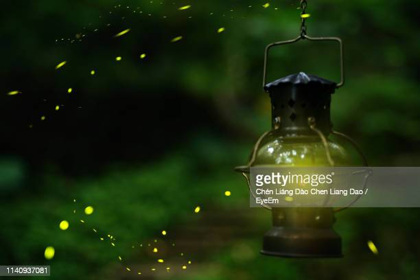 close-up of fireflies by illuminated lantern hanging outdoors - firefly stock pictures, royalty-free photos & images