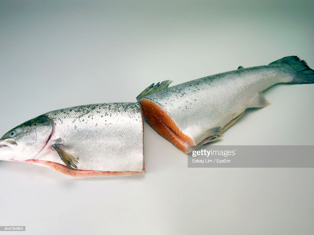 Close-Up Of Fish Against White Background : Stock Photo