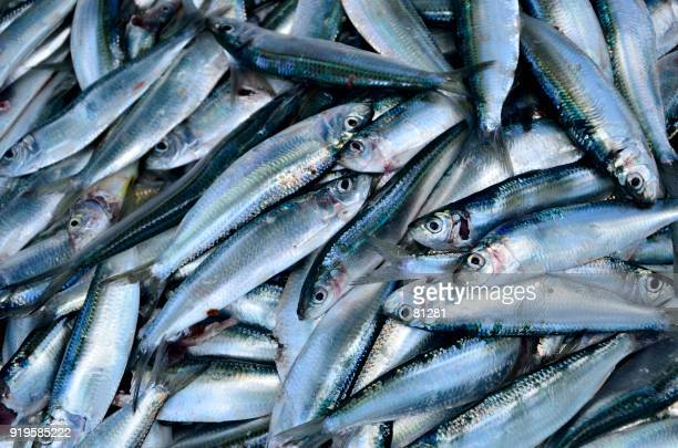 close-up of fish at a market - fresh seafood stock photos and pictures