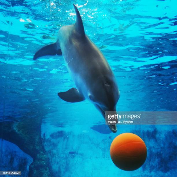 close-up of fish by ball swimming in sea - aquatic mammal stock pictures, royalty-free photos & images