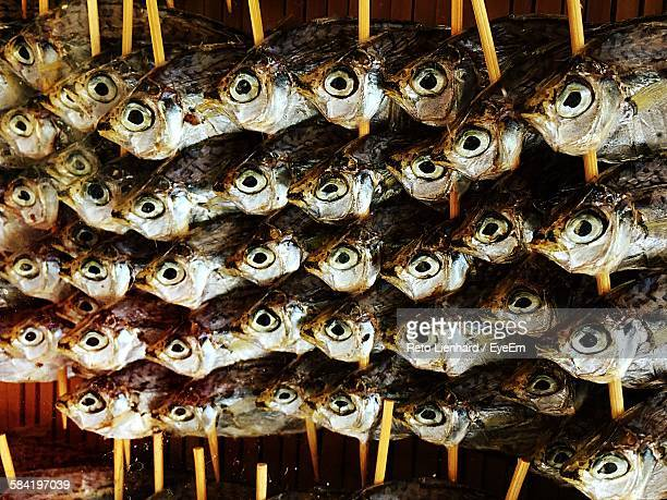 close-up of fish drying against wall - lienhard stock pictures, royalty-free photos & images