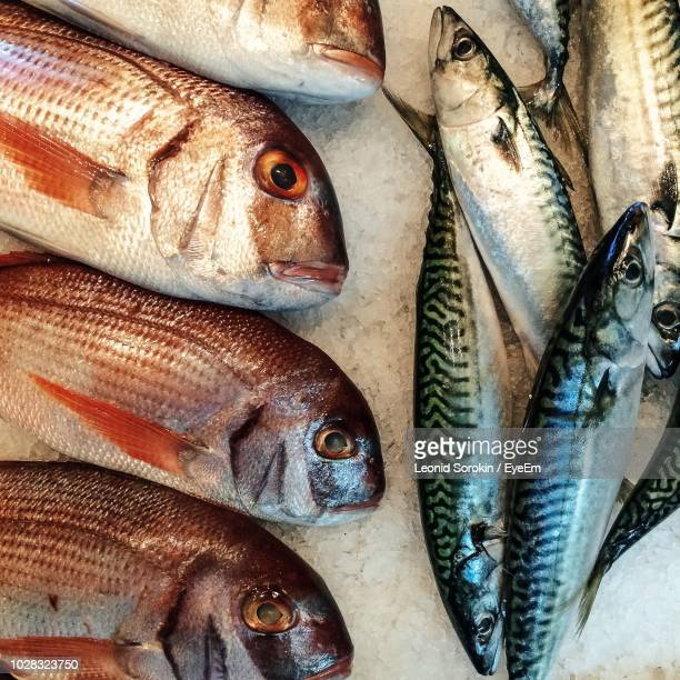 close-up of fish for sale in market - nizhny novgorod oblast stock photos and pictures