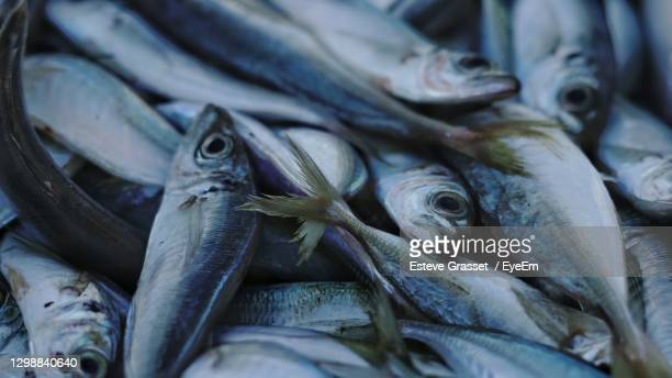 close-up of fish for sale in market - 干物 ストックフォトと画像