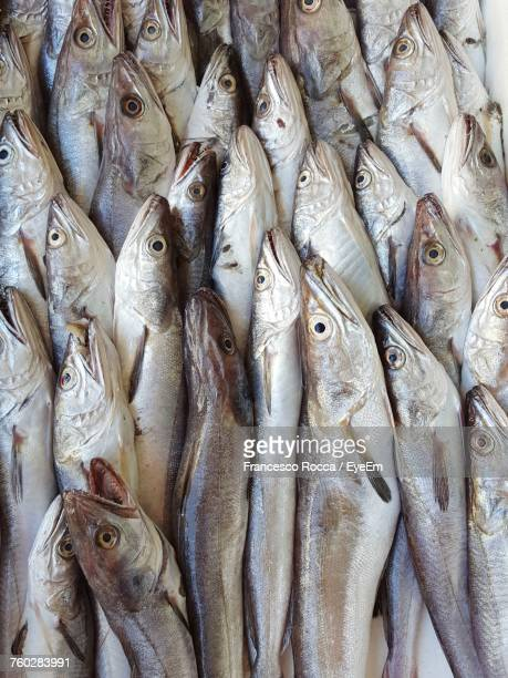 close-up of fish for sale in market - calabria stock pictures, royalty-free photos & images