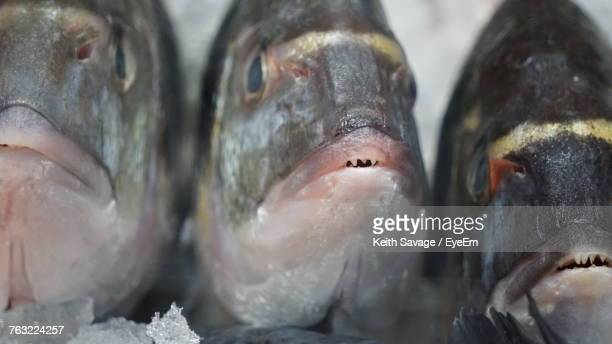 close-up of fish for sale in market - keith savage stock-fotos und bilder