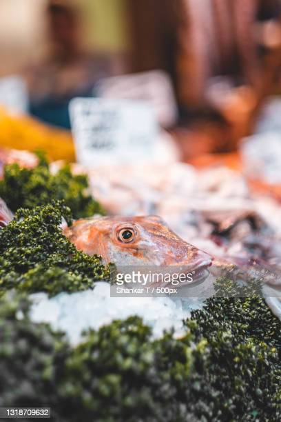 close-up of fish for sale in market,london,united kingdom,uk - crucifers stock pictures, royalty-free photos & images