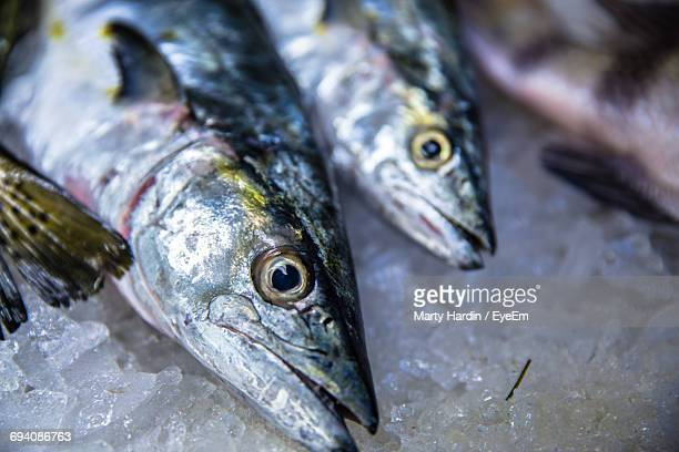 close-up of fish for sale - marty hardin stock photos and pictures
