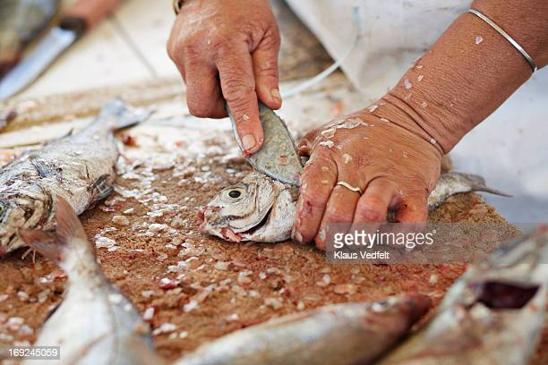 Close-up of fish getting cleaned