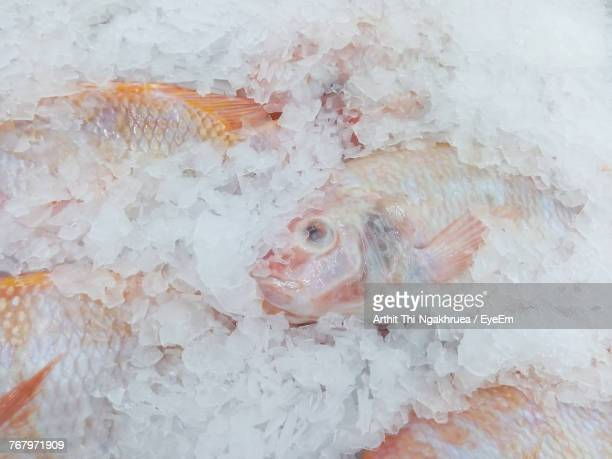 Close-Up Of Fish In Crushed Ice At Market