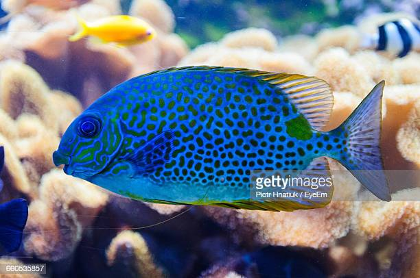 close-up of fish in sea - piotr hnatiuk stock pictures, royalty-free photos & images