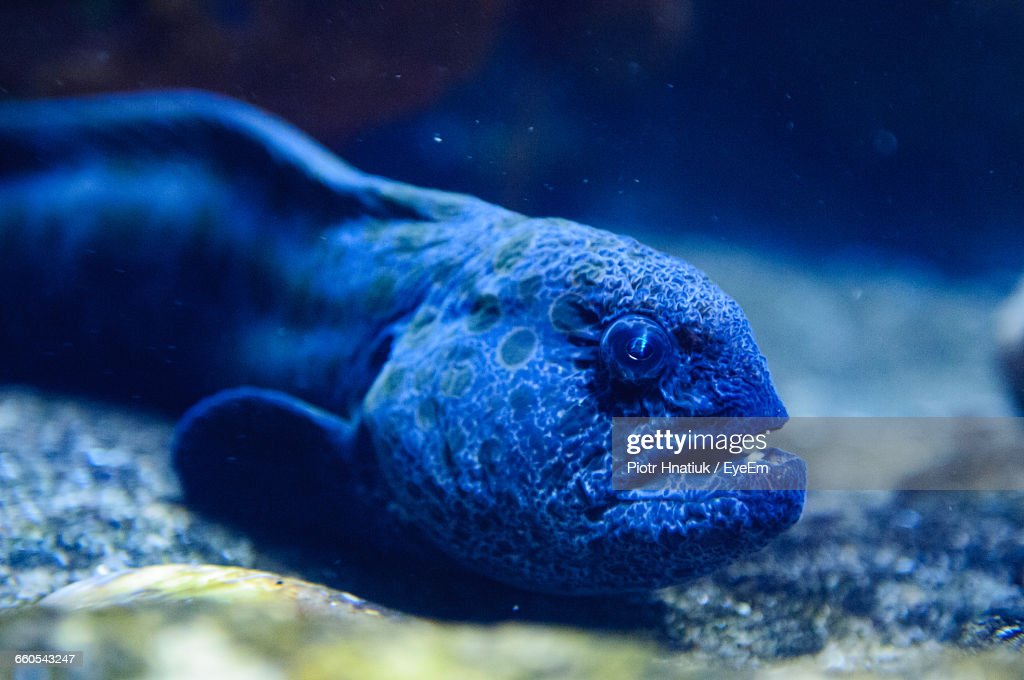 Close-Up Of Fish In Sea : Stock Photo