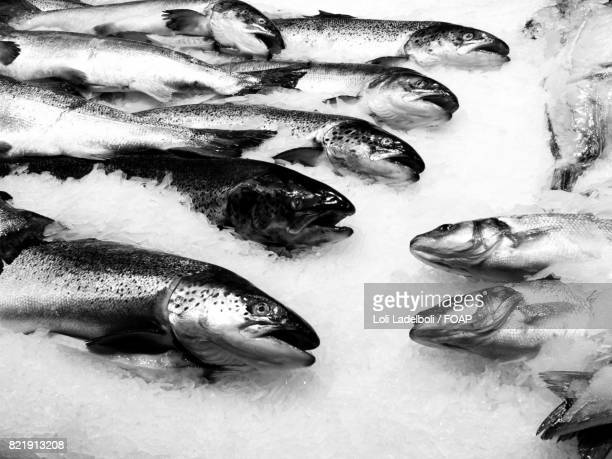 close-up of fish on crushed ice - loli stock photos and pictures