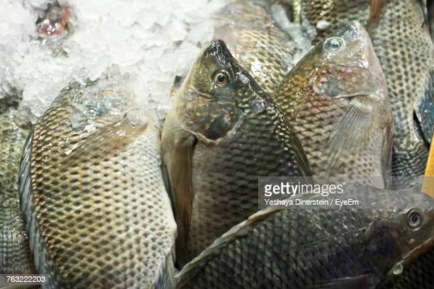 Close-Up Of Fish On Ice For Sale
