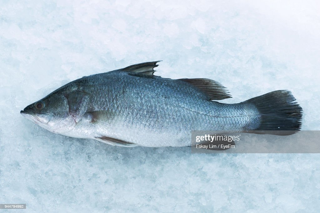 Close-Up Of Fish On Ice : Stock Photo
