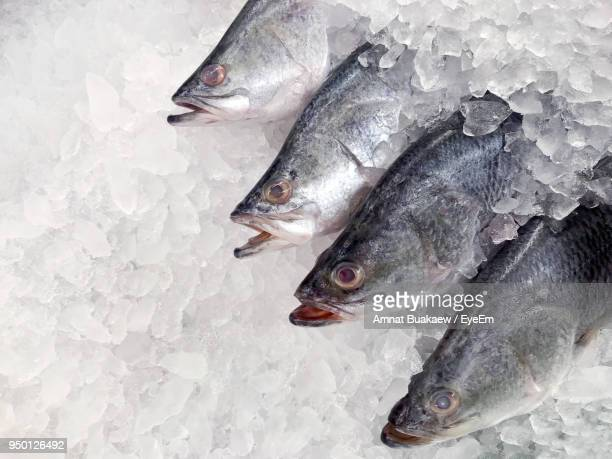 close-up of fish on ice - cold temperature stock pictures, royalty-free photos & images