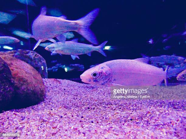 close-up of fish swimming in aquarium - nikitina stock pictures, royalty-free photos & images