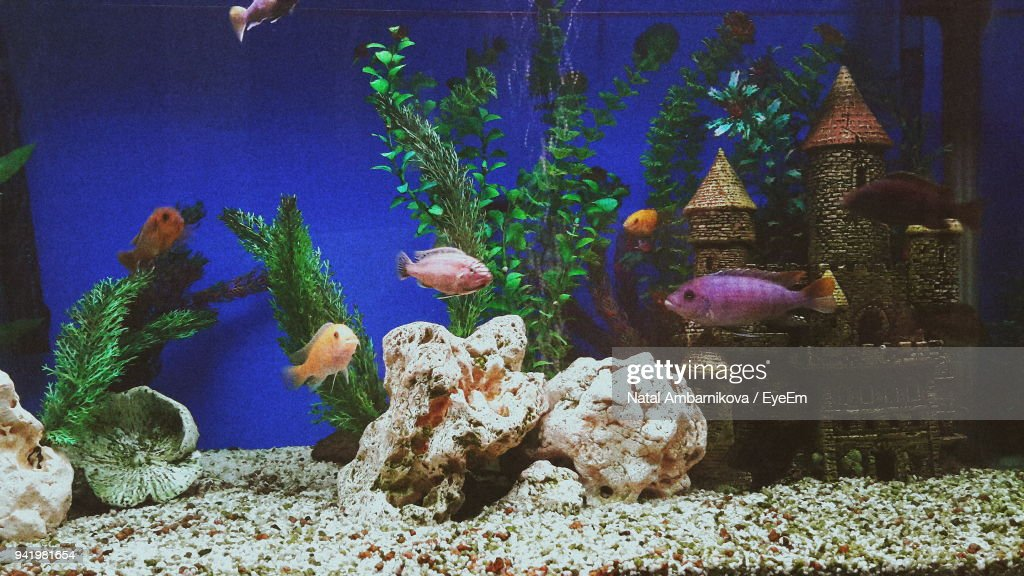 Close-Up Of Fish Swimming In Aquarium : Stock Photo