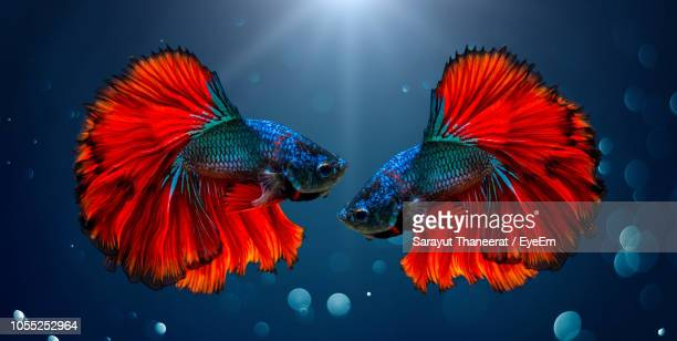 close-up of fish swimming in sea - undersea stock pictures, royalty-free photos & images