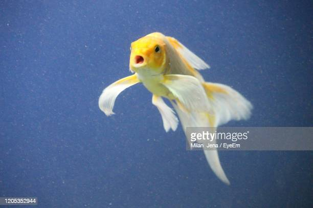 close-up of fish swimming in sea - one animal stock pictures, royalty-free photos & images