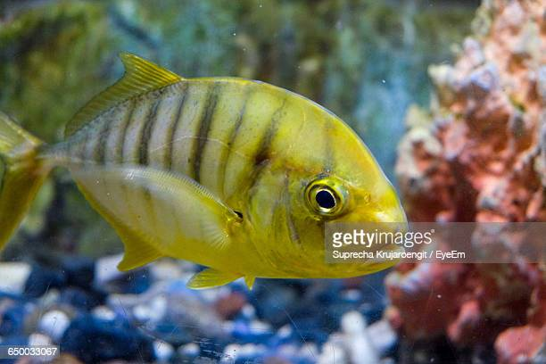 close-up of fish swimming in sea - chanthaburi stock pictures, royalty-free photos & images