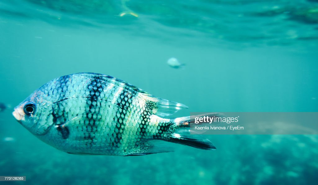 Close-Up Of Fish Swimming In Sea : Photo