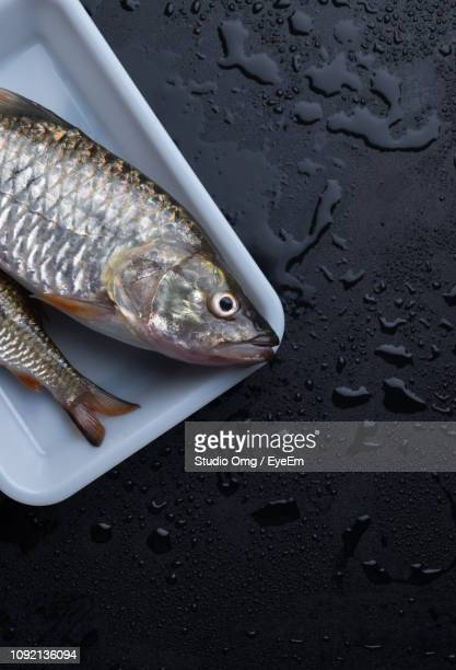 Close-Up Of Fishes In Plate