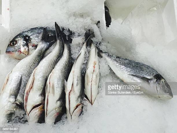 Close-up of fishes on ice for sale