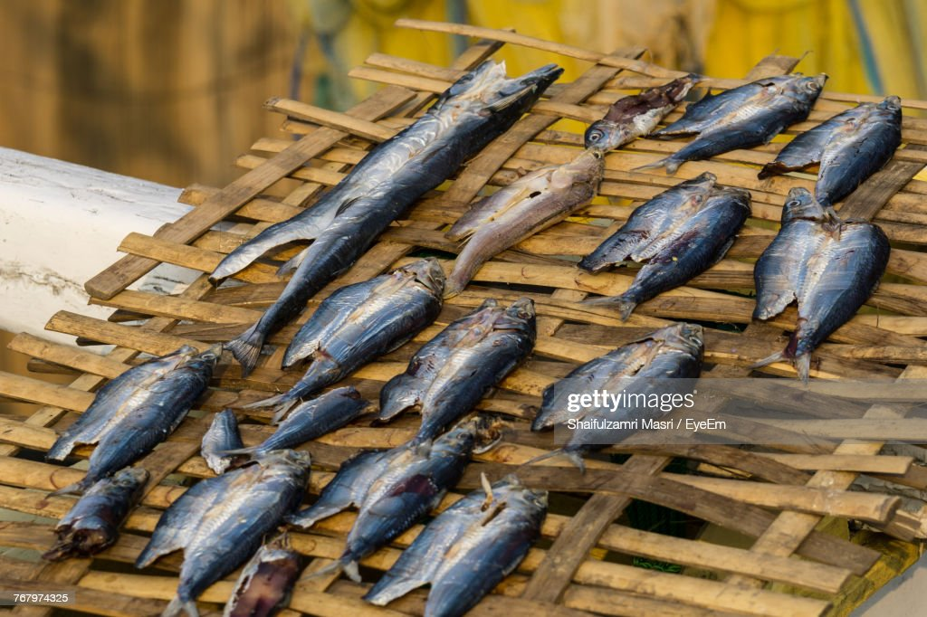 Close-Up Of Fishes : Stock Photo