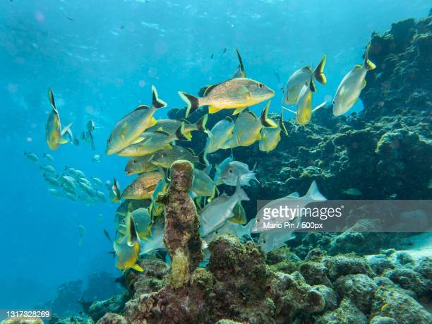 close-up of fishes swimming in sea,colombia - colombia stock pictures, royalty-free photos & images