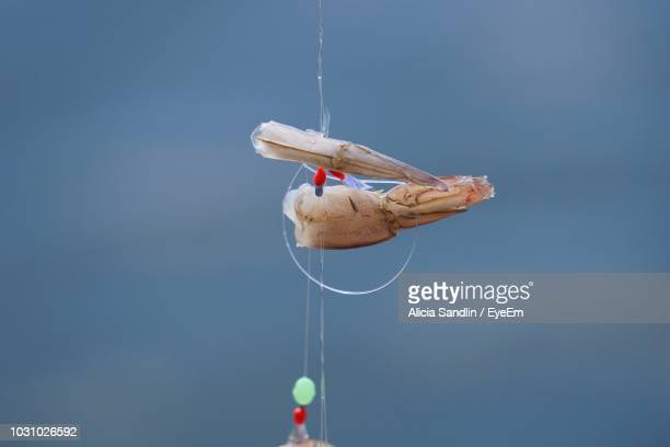 Close-Up Of Fishing Tackle Hanging Outdoors