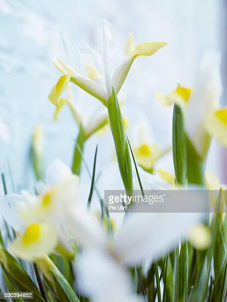 Close-up of fleur de lis.