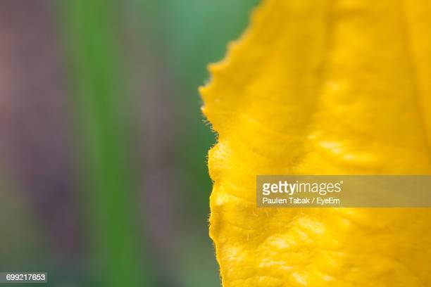 close-up of flower against blurred background - paulien tabak stock-fotos und bilder