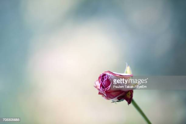 close-up of flower against blurred background - paulien tabak foto e immagini stock